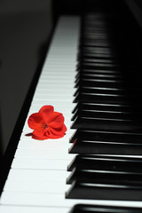Piano and a red flor.