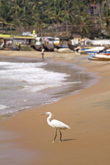 Egret By The Ocean