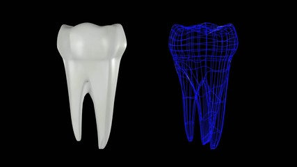 Tooth Construction