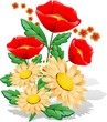 Papaveri e margherite-Poppies and Daisies-Vector-2