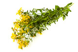 herbal medicine Hypericum isolated