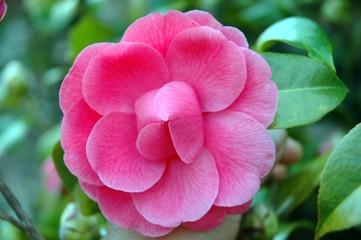 petals also