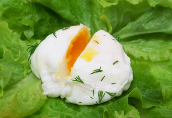Poached egg on lettuce