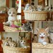 collage gattini nel cesto