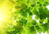 Fototapeta światło słoneczne - belek - Tła