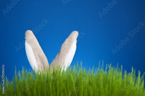 Toy stuffed bunny rabbit hidden in grass