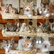 mosaico gattini nel cesto