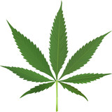 Fototapety canabis leaf vector