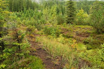 Piller Moor - Piller Swamp 15