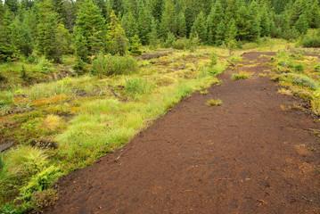 Piller Moor - Piller Swamp 16