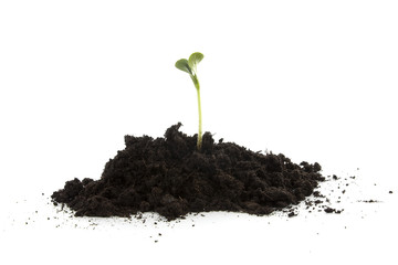 Pile of black garden soil with young plant over white background