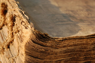 Edge of an old book