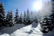 Wintersonne - winter sun
