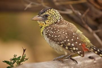 Vogel Afrika Portrait