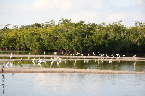 sanibel island birds 1