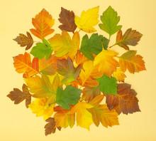 Jesienią liści zielnik