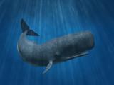 Fototapete Ozean - Meer - Meeressäuger