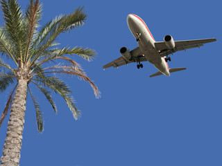 Palm tree  and airplane