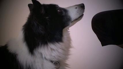 chien qui baille et regarde son maître