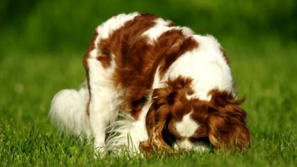 cane rimproverato