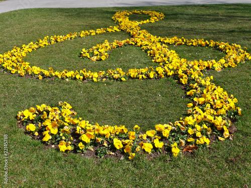 Fotobehang Pansies musikalische Blumen