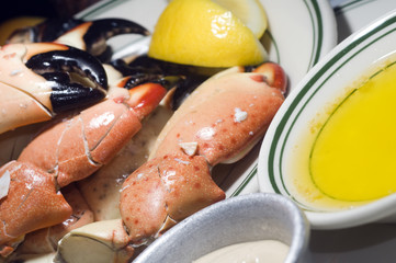 florida stone crab claws
