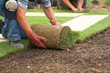 Laying sod for new lawn - 22151354