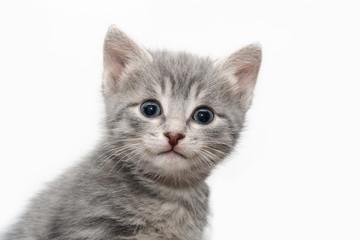Little tabby-cat portrait
