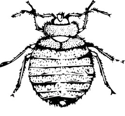 bed bug vector isolated on white  illustration silhouette