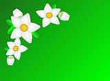Vector Eps10.  Green Copy Space with White Flowers poster