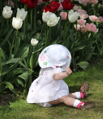 Toddler in a tulip garden.
