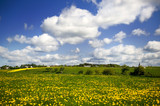 Landscape with grass fields in the Eifel poster