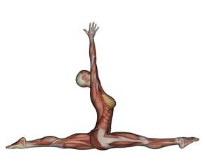 Yoga - Monkey Pose. Female Muscles
