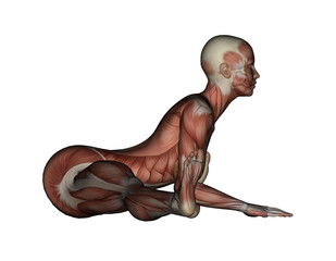 Yoga - Wide Angle Bend Pose. Female Muscles