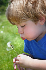 Boy blowing a dandelion