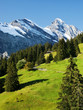 A Green Meadow in the Swiss Alps