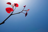 Branch with red leaves against blue sky rising towards the sun