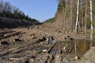 Deforested area with log's piles and dirt road