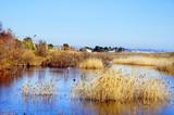 Torredembarra wetlands, Spain poster