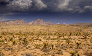 Desert landscape in Arizona