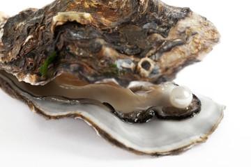 Auster mit Perle