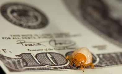 Nibbled by bug larvae banknote, economic recession concept