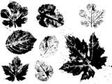 Fototapete Botanical - Geknackt - Andere