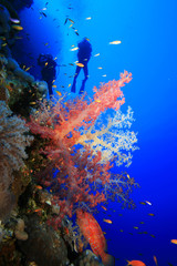 Scuba Diving over Coral Reef