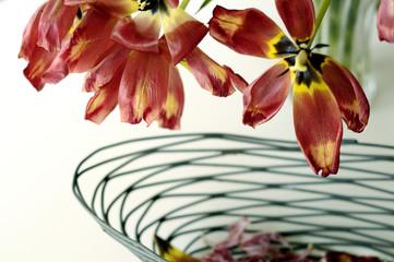 Stillleben mit Tulpen # 7754