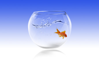 fishbowl with gold fish