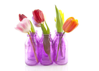 colorful tulips in pink vases over white background