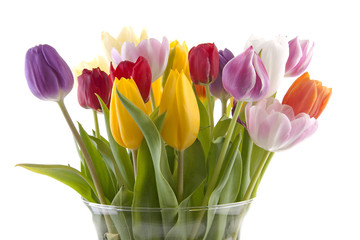 colorful Dutch tulips in vase over white background