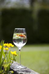 a goldfish in a wine glass