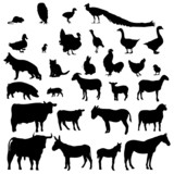 Fototapety animales de granja